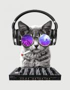 Μπλουζάκι με στάμπα DJ Cat